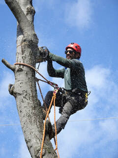 Best Charlottesville Tree Service Company