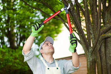 Tree Trimming Cville and Albemarle County