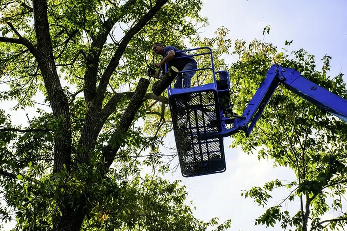 Tree removal Charlottesville